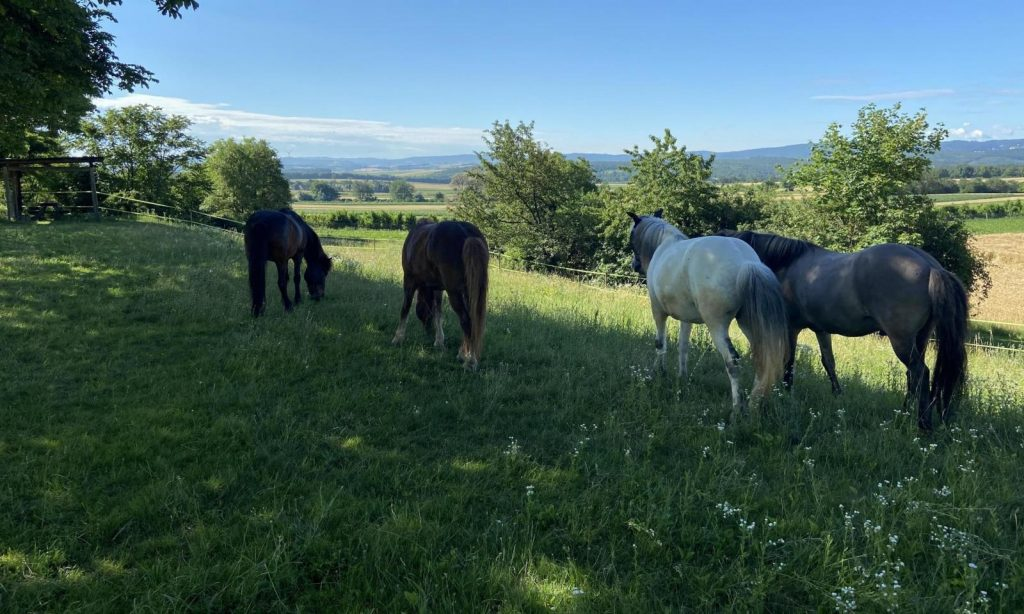 Pferde stehena auf einer grünen Wiese